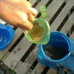 Preparação da solução do neem (inseticida natural)